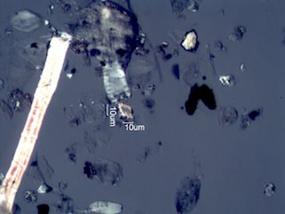 Pyrolyzed Calcium Oxalate Phytoliths