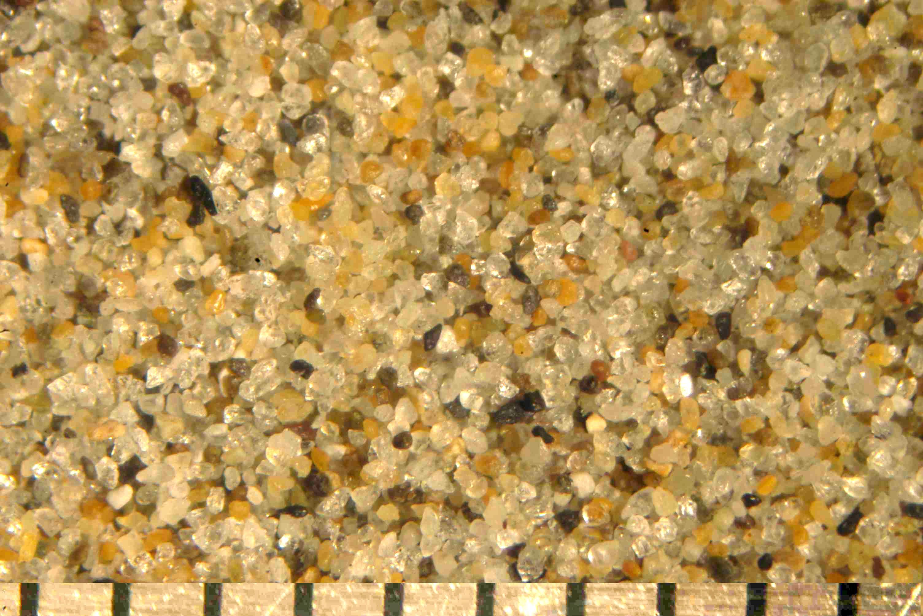 Sand cannon beach oregon for Soil under microscope