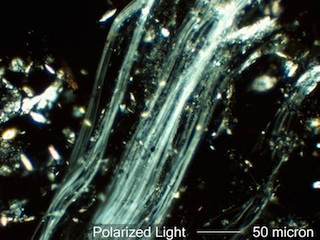 Chrysotile Field 1 in 1.550 RI Liquid Viewed with Polarized Light
