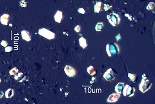 Calcium Oxalate Phytoliths