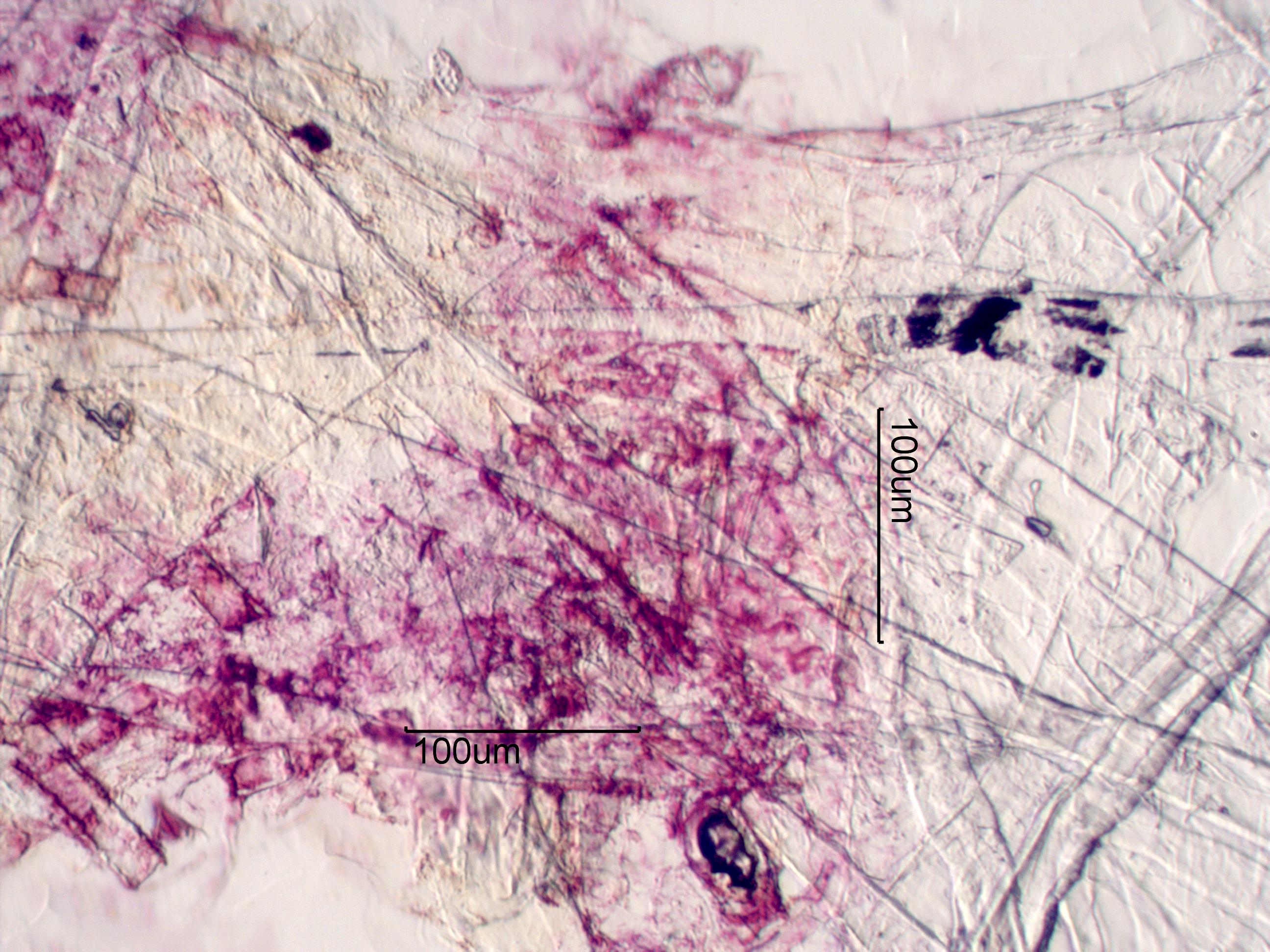 Newspaper Ink And Fiber Under The Microscope
