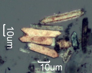 Pyrolyzed Phytolith